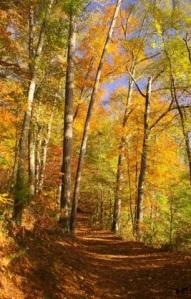 AutumnTrail